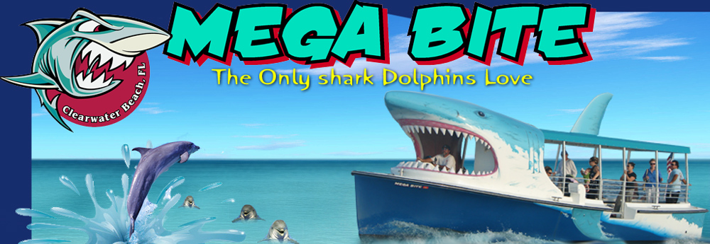 Mega Bite!  Dolphin cruises Clearwater Beach Fl